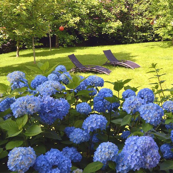 tumbonas cómodas del jardín