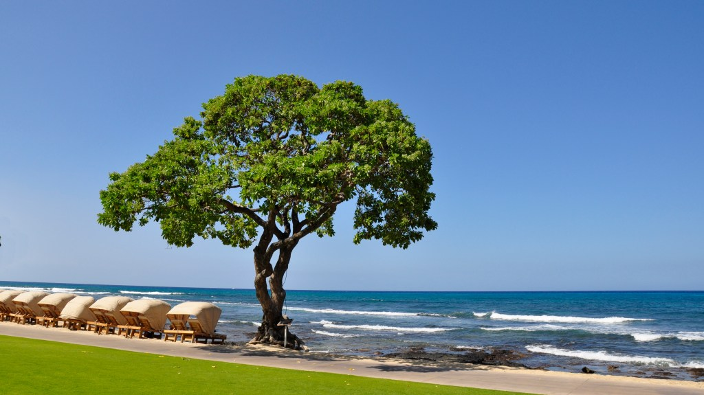beachside cabanas and Heliotrope Beach Tree