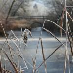 Winterliche Szene an einem kleinen Weiher