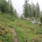 Die Hochalm am Hochkaltermassiv an einem regnerischen Junitag