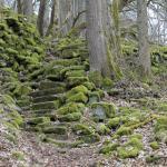 Bemooste Steintreppe im Wald