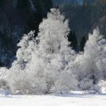 Bäume und Sträucher mit Rauhreif