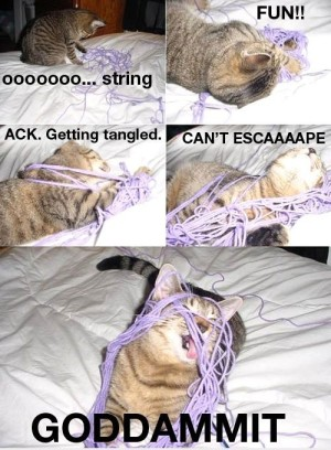 Cat vs. yarn