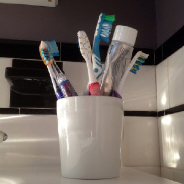 Toothbrushes in a toothbrush holder