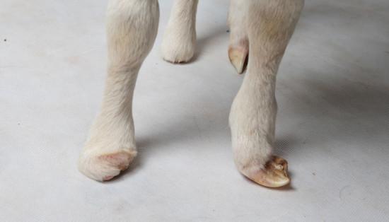 Charity's feet