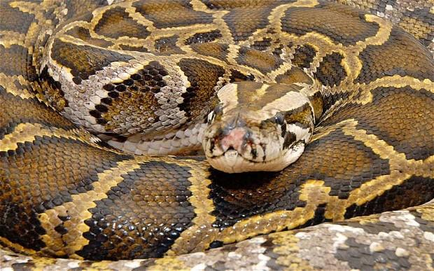 Python coiling