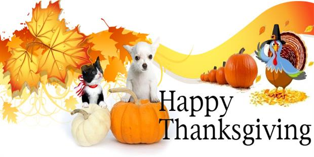Celebrate Thanksgiving With Your Pets