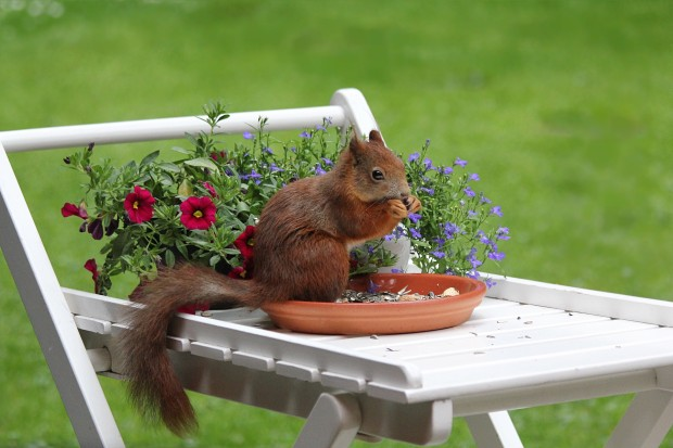 Squirrel appreciation day: They aren't damaging your plants.