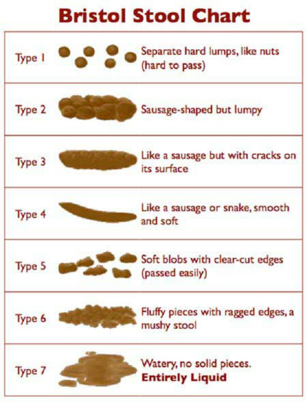 squat to poop: bristol stool chart classifying stool
