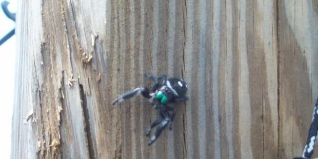 spider animals in the wild