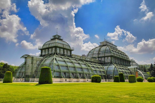 top destinations: vienna palm house