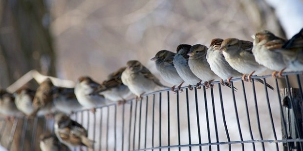 Bird-Obituaries...-A-Real-Thing-And-Oh-So-Useful-bird-birds