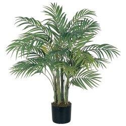 Small Of Areca Palm Tree
