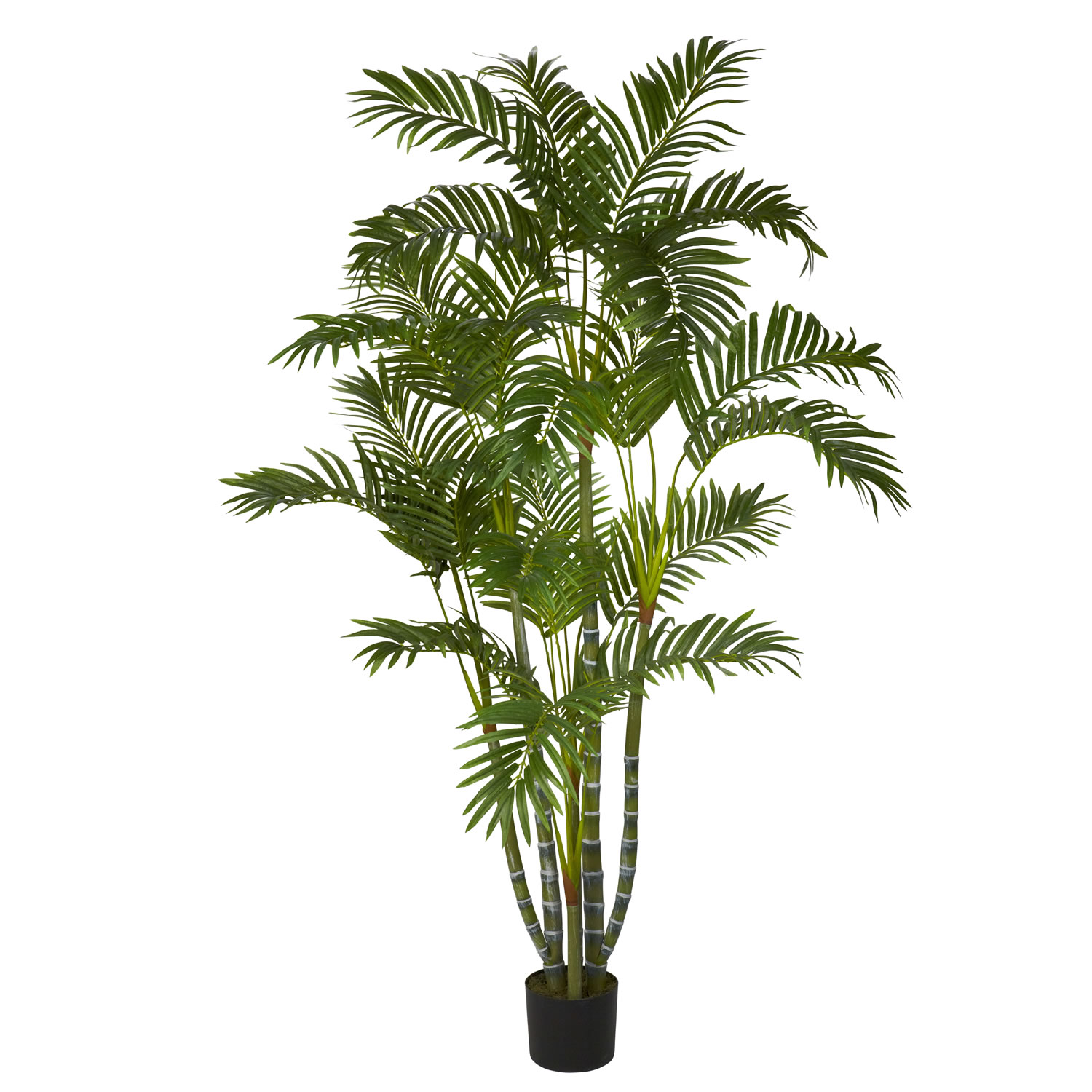 Piquant Closeup Image Foot Biggy Style Areca Palm Potted Areca Palm Tree Leaves Turning Yellow Areca Palm Tree Outdoor Care houzz-03 Areca Palm Tree