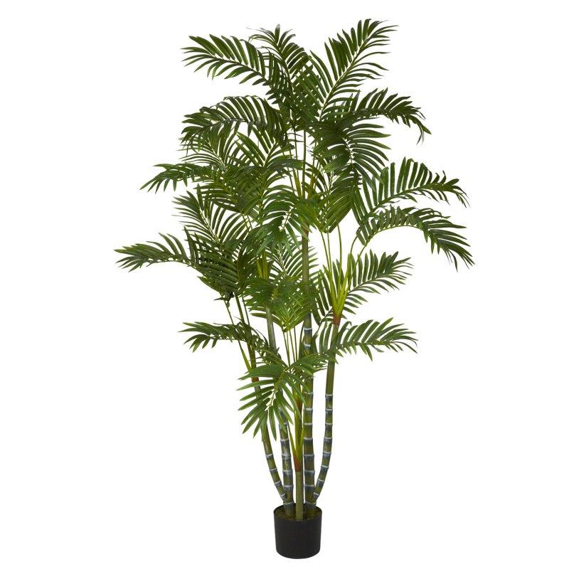 Large Of Areca Palm Tree