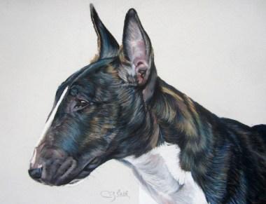 pastels secs bull terrier