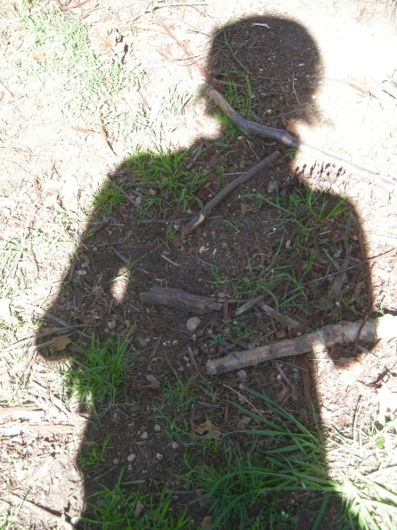 shadow-plant-1