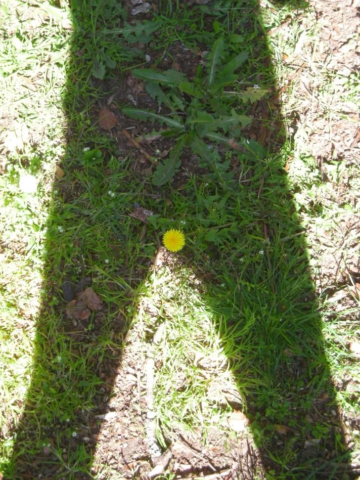 shadow-plant-12