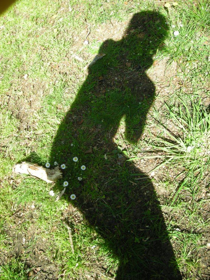 shadow-plant-15