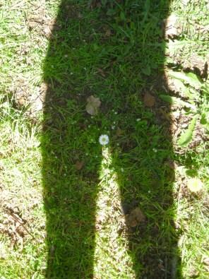 shadow-plant-9