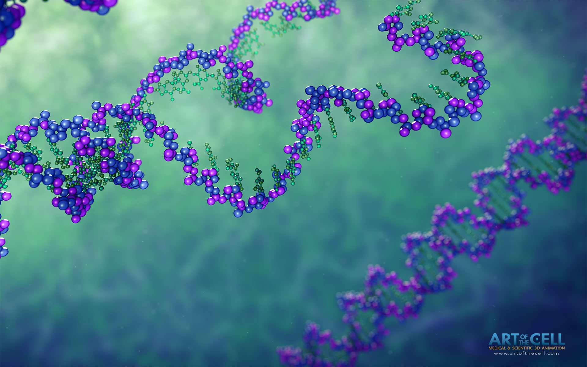 Dna Replication 3d These DNA structures come from
