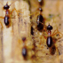 How Termites Are Teaching Architects To Build More Efficient Buildings