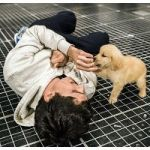 The Dogs Of 'The Curious Incident Of The Dog In The Night-Time'