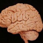 FTC Cracks Down On Brain-Training Site Lumosity