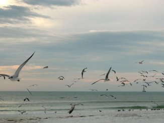 seagulls-flying-over-the-beach-at-sunset