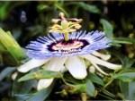 miller flower 1
