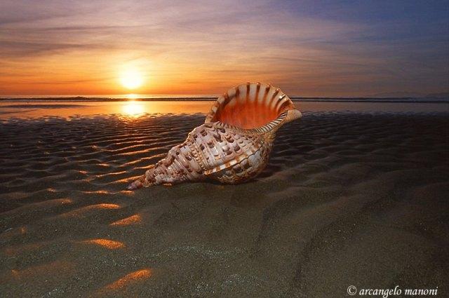 conchiglia-al-tramonto