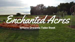 Visit Enchanted Acres Pumpkin Patch in Sheffield, IA
