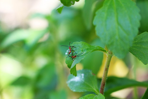 growing food with helpful bugs