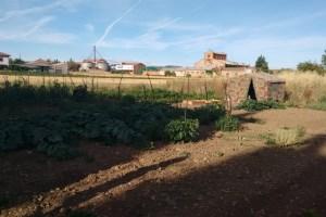 Un espacio abierto a todos los que quieran acercarse a cultivar sus propios alimentos. / CCU