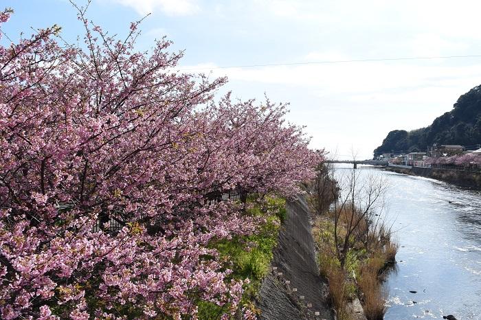 blog_kawazu