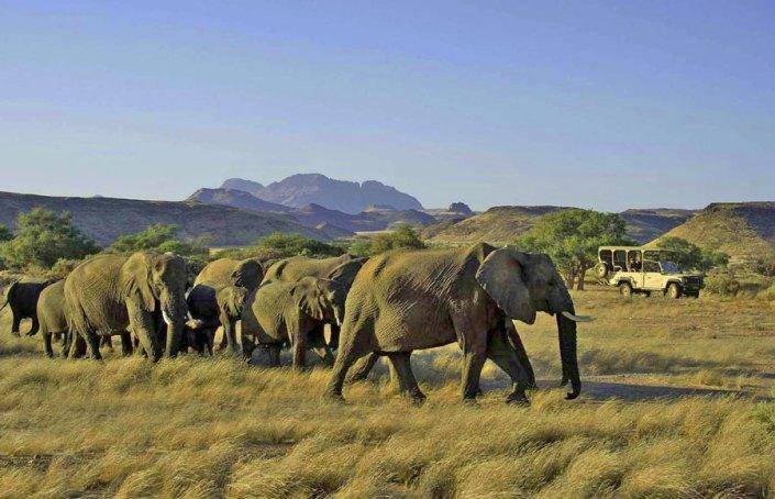 Damaraland Desert Elephants