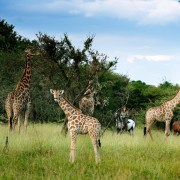 Botswana - Maun - Safari - Okavango Delta by Horse