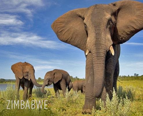 Zimbabwe Luxury Safari