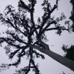 A Ceiba Tree at the Tikal Park