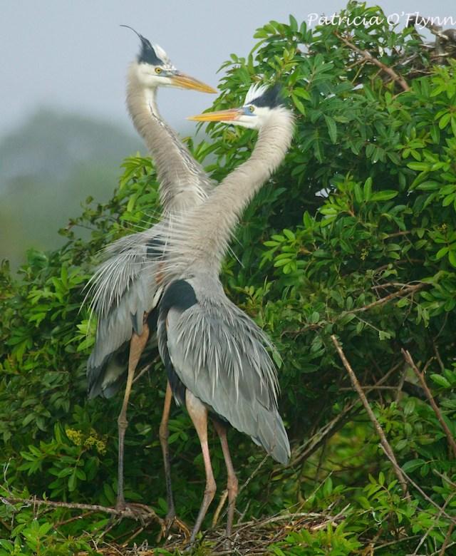 herons neck