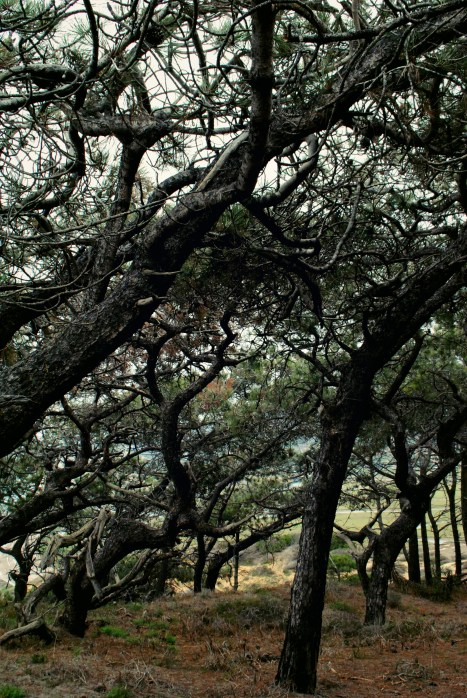 woody tor 2_Fotor