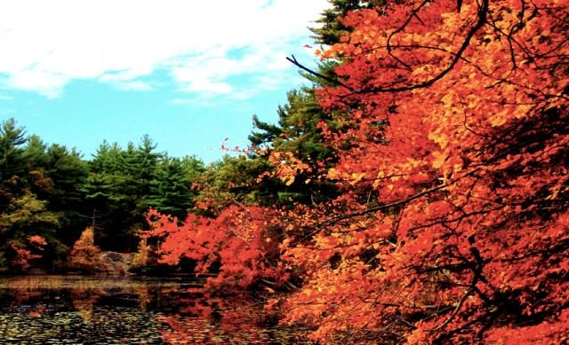 bellevue-pond-middlesex-fells-reservation_Fotor