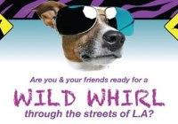 wild-whirl-2