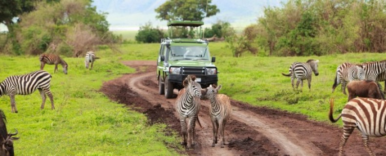 Operation: Safari in Tanzania