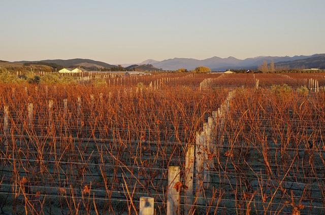 marlborough new zealand vineyard