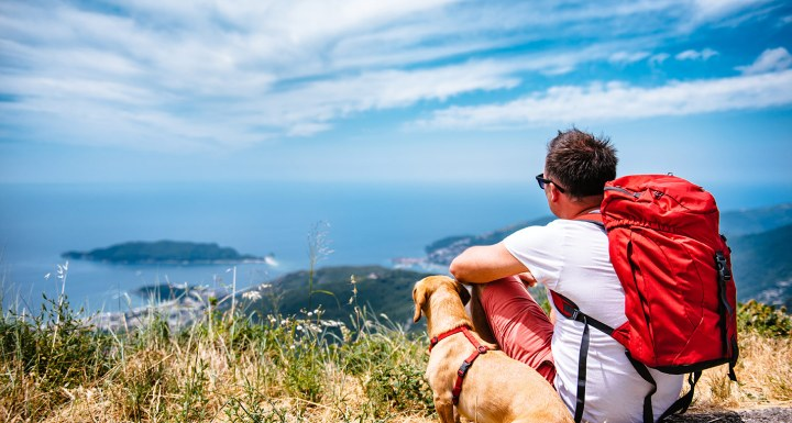 tips-for-safe-traveling-with-pet