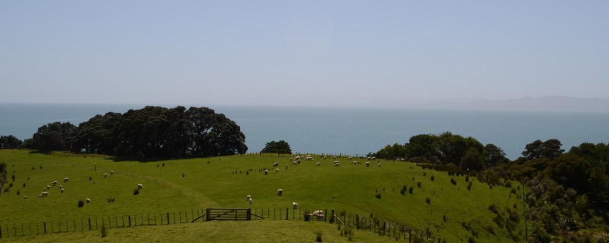 Viviendo en Nueva Zelanda – Un paraíso inesperado