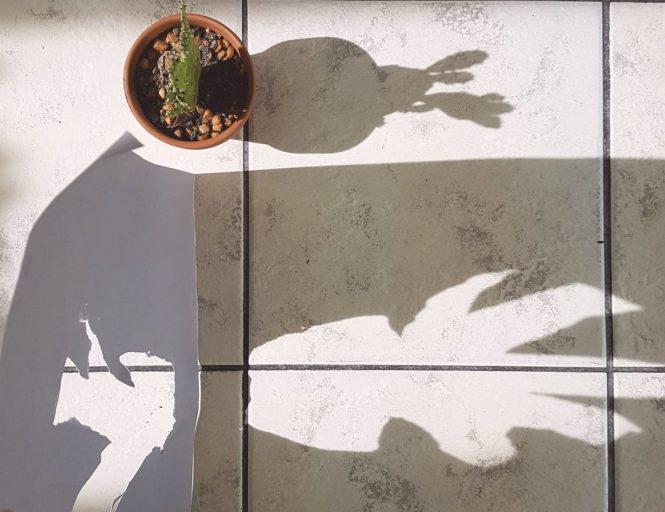 Plant shadow 3