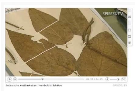 Botanische Kostbarkeiten - Humboldts Schätze (Spiegel TV)