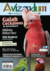 Aviz Cover Oct15